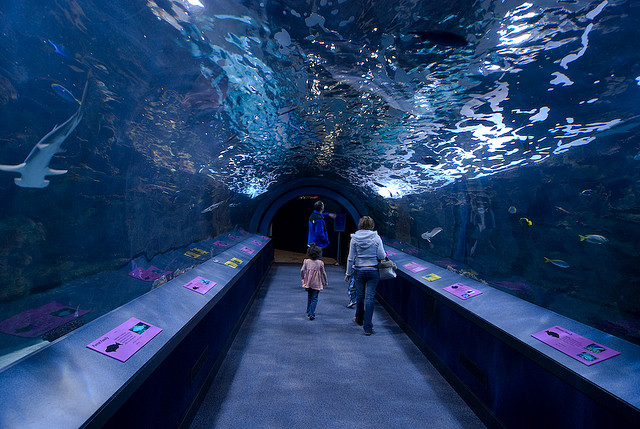 Newport Aquarium in Newport, Kentucky